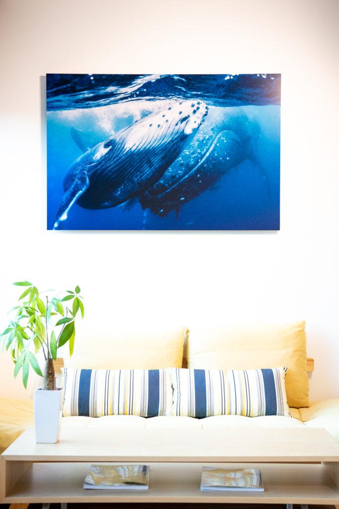 岡田裕介:クジラの親子