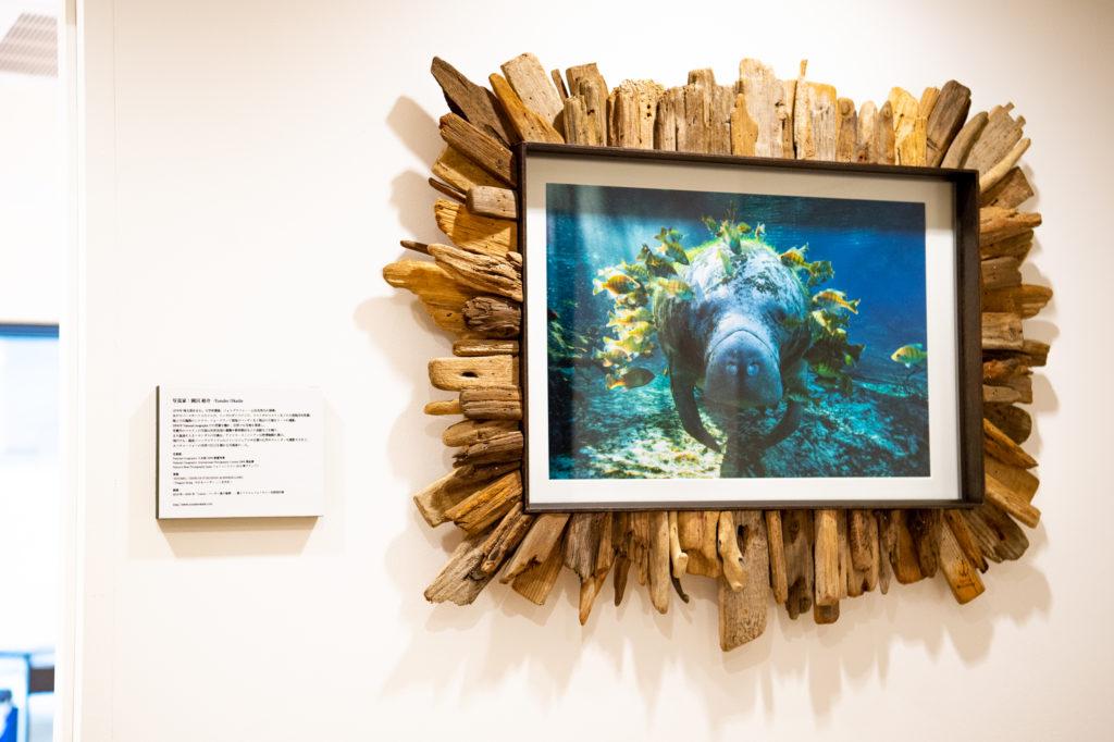 岡田裕介:マナティ「National Geographic International Photography Contest 奨励賞」